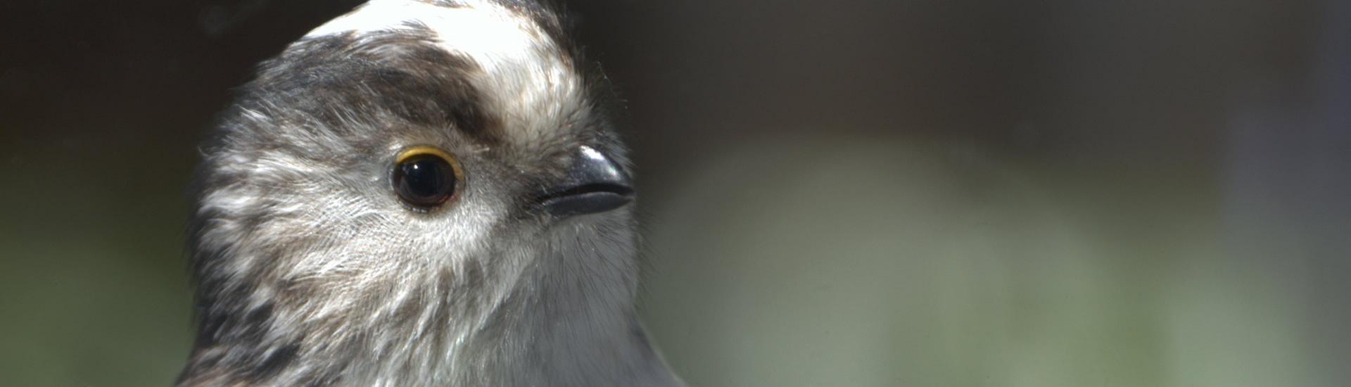Wildlife at Tree Tops Caravan Park